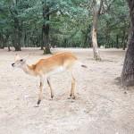 Le zoo African Safari de Plaisance du Touch (Toulouse)