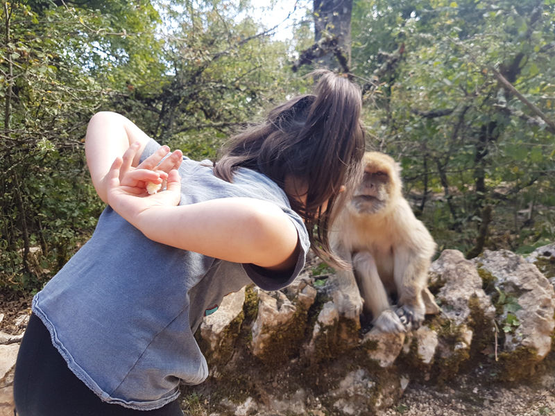 foret-des-singes-rocamadour